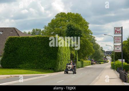 Deutschland, NRW, Städteregion Aachen, Nationalpark Eifel, Monschau-Höfen, haushohe Buchenhecken sind typisch im Monschauer Heckenland - Stock Image