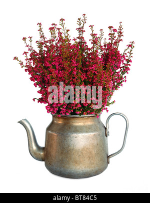 Purple heather in vintage pot - Stock Image