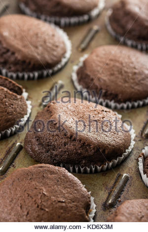 Fresh baked chocolate cup cakes in the baking tray. - Stock Image