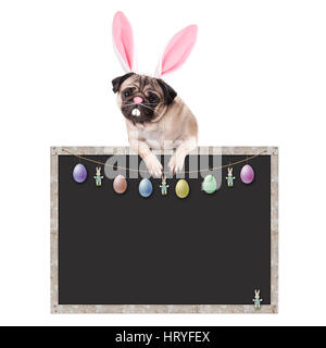 cute pug puppy dog with bunny ears diadem hanging with paws on blank blackboard sign, with easter decoration, on - Stock Image
