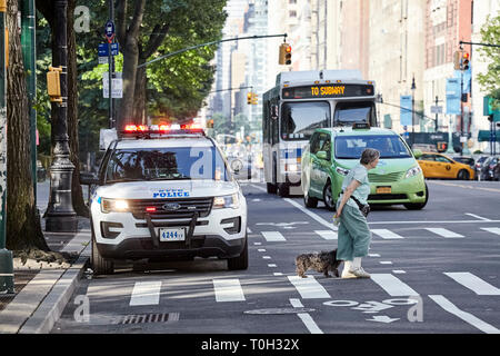 New York, USA - July 01, 2018: Pedestrian with a dog on zebra crossing with NYPD vehicle parked on a street by the Central Park. - Stock Image