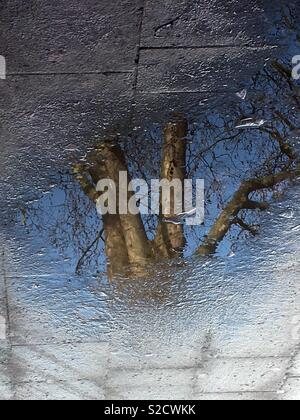 Tree reflected in puddle in the street - Stock Image