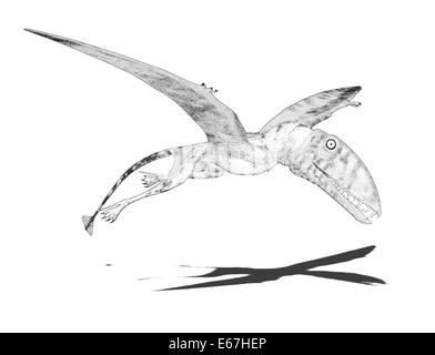 Dinosaurier Dimorphodon / dinosaur Dimorphodons - Stock Image