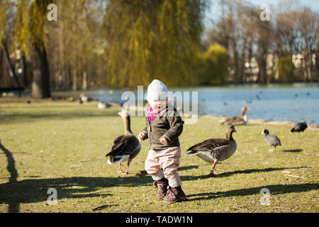 Toddler girl playing with geese at a pond in park - Stock Image