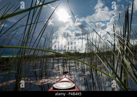 Kayak glides through wetlands river of grass , Everglades National Park, Miami, Florida, USA - Stock Image