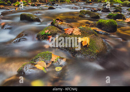 leaves on stones in river Kamenice in autumn with long exposure, Bohemian Switzerland, Czech Republic - Stock Image
