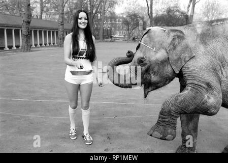 Strange tales of London. Beauty Queens (who will be in the pancake race on Tuesday) and baby elephant Minoti - she is five, but for an elephant that is a baby. February 1975 75-00776-014 - Stock Image