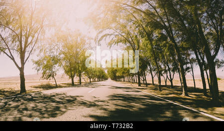 Long way road vieqed from asphalt ground level with trees on the sides - infinite travel concept in sunny day - freedom and vacation feeling - Stock Image