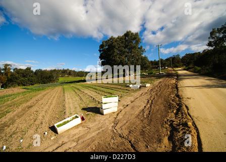 TOWAMBA, Australia - Farm in Towamba, New South Wales, Australia - Stock Image