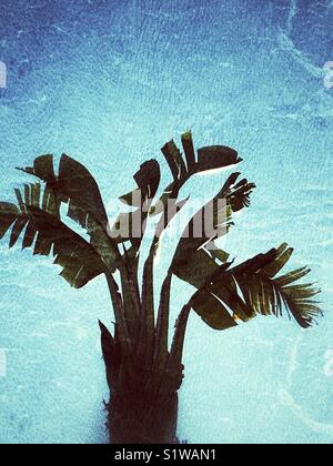 Tropical plantain tree with texture - Stock Image