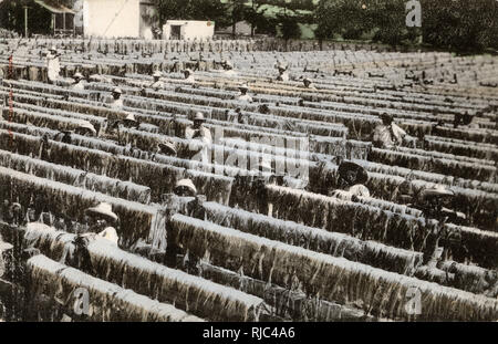 Yucatan Peninsula, Mexico, Central America - Drying Henequen. After extraction from the plant, henequen is processed as a textile in various forms to obtain a range of products for domestic, commercial, agricultural and industrial use, as binder twine for crops such as hay, rope, rugs etc. Similar to sisal. - Stock Image