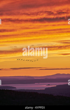Dramatic sunset with geese from Cadillac Mountain in Acadia National Park in Maine - Stock Image