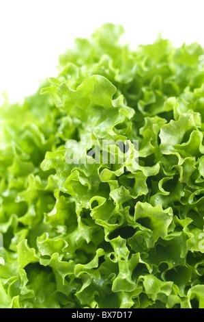 Fresh green lettuce isolated on white background - Stock Image