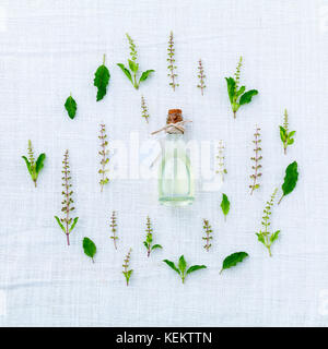 The circle of fresh holy basil flower and holy basil leaves from the garden on white fabric background. - Stock Image