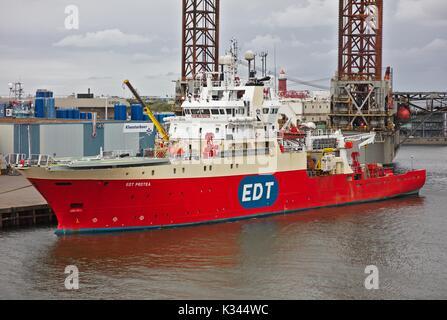 EDT Protea - Stock Image