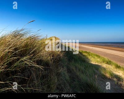 Sand dunes in the Holme Dunes National Nature Reserve on the north Norfolk coast, England, UK - Stock Image
