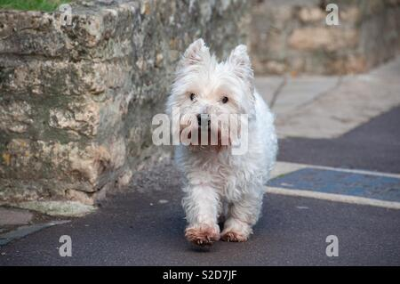 Puppy exploring the world - Stock Image