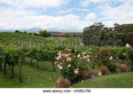 Toms Cap Winery in the Strzelecki Ranges, Gippsland, Victoria, Australia - Stock Image