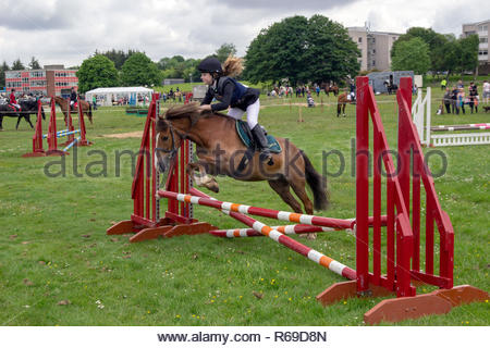 Female show jumper taking part in the East Kilbride Open Cattle show 2014 equestrian competition. - Stock Image