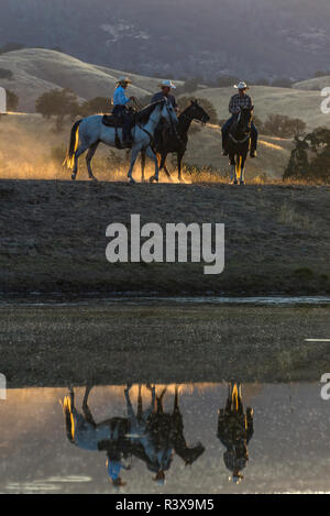 USA, California, Parkfield, V6 Ranch riders on their horses and reflection a dawn (MR) - Stock Image