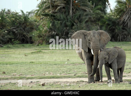A mother elephant and her baby. - Stock Image