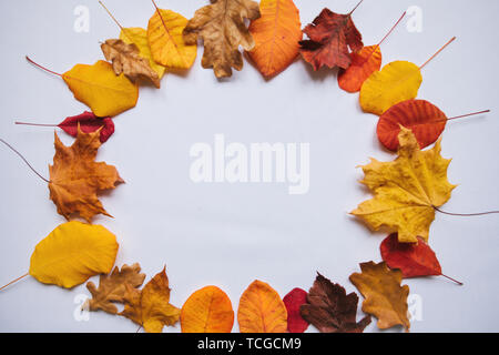 Autumn leaves on a white background. In the middle there is a place for text. Abstract autumn composition. - Stock Image