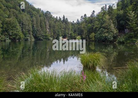 Idyllischer Kleiner Moorsee Nördlich Von Kufstein Gelegen - Stock Image