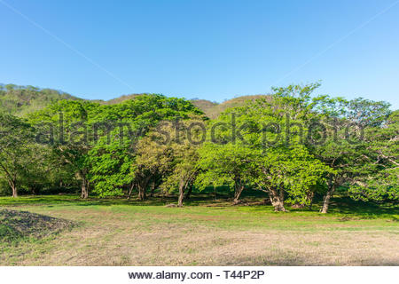 Tropical rainforest in Guanacaste province of Costa Rica - Stock Image