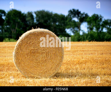 uk  weather   hay harvest - Stock Image
