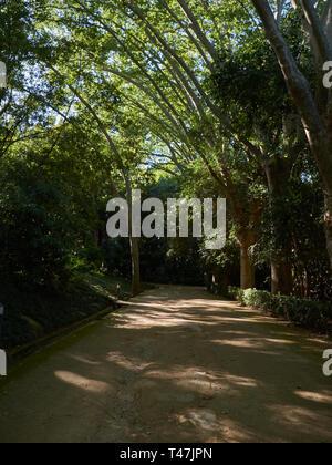Plane tree walk. La Concepción botanical garden. Málaga, Andalusia, Spain. - Stock Image