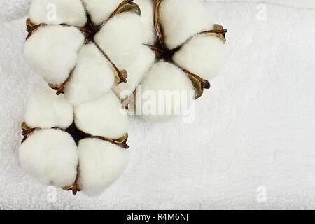 Cotton boll flowers and white fluffy towel. Image shot from an overhead top view with free space for text. - Stock Image
