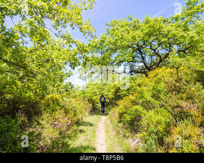 Young man treking in nature north from Lisbon, Portugal, ona sunny day. - Stock Image
