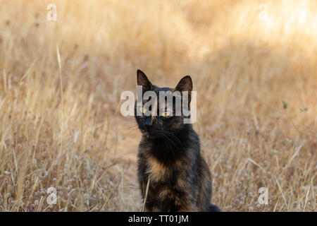 black domestic cat sitting in dried plants. suitable for animal, pet and wildlife themes - Stock Image