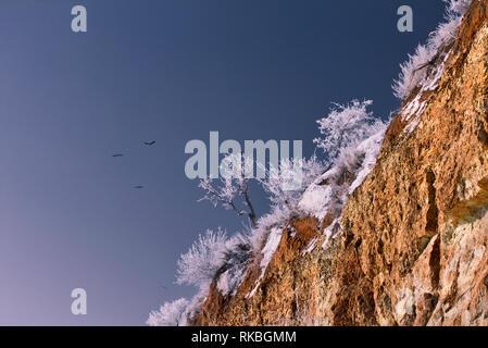Raven - guard of the Grand canyon, Arizona, USA - Stock Image