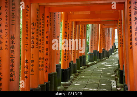 Tunnel of Senbon Torii gates in Fushimi Inari Shrine in Kyoto, Japan. The donation of the traditional red gates are believed to grant wishes to the do - Stock Image