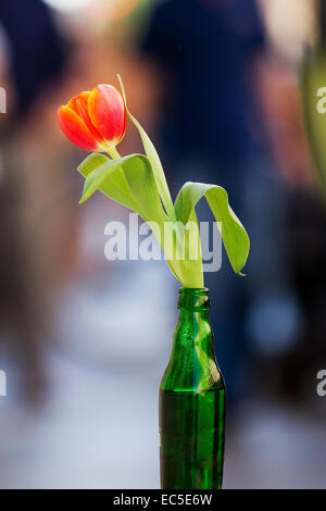 red tulip in green bottle - Stock Image