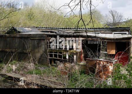 Abandoned allotment shed, Sheffield UK - Stock Image