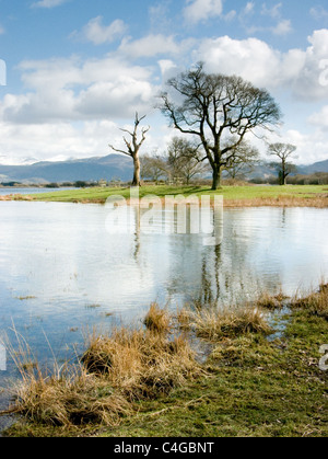 Bare trees beside Buttermere lake in the English Lake District - Stock Image