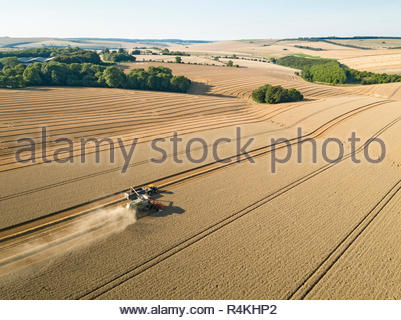 Harvest aerial farm landscape of combine harvester cutting summer wheat field crop with tractor trailer - Stock Image