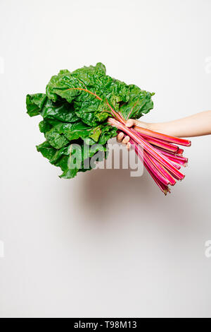 Hand of a girl holding a fresh bunch of swiss chard against a white background - Stock Image