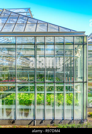 Greenhouse exterior with colorful flowers inside in the Netherlands. - Stock Image