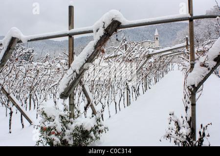 Vineyards in winter, Faedo, Trentino, Italy - Stock Image