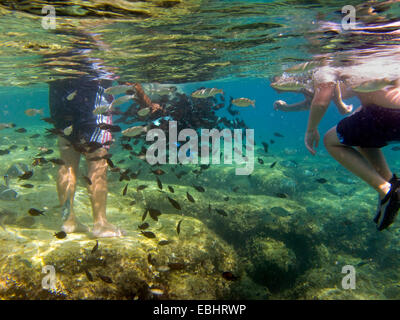 Tourists are feeding fish with bread under water, at Fig Tree Bay, Protaras, Cyprus, Europe. - Stock Image