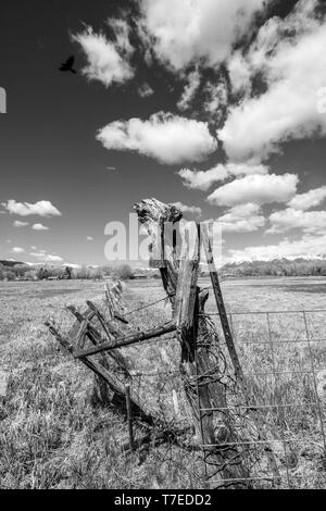 Black & white view of barbed wire and wooden fence posts border ranch pasture; Vandaveer Ranch; Salida; Colorado; USA - Stock Image