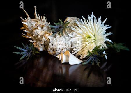 Still Life with Spondylus Thatcheria and Mum - seashells with flower - Stock Image