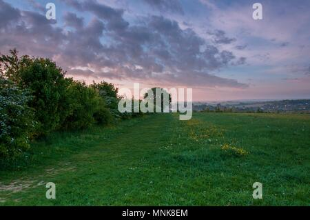 A hedgerow and tree at sunrise in the English countryside - Stock Image