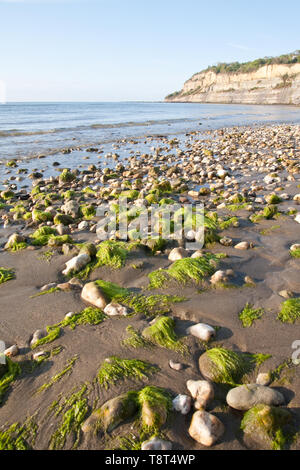Shanklin beach looking towards Knock cliff on a sunny spring morning taken from a low angle at low tide - Stock Image