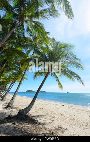 Idyllic view of an exotic tropical sandy sand with bent palm trees, Palm Cove, Cairns Northern Beaches, Far North Queensland, QLD, FNQ, Australia - Stock Image