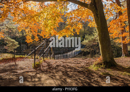 Vivid autumn woodland colours at Wynch Bridge over the river Tees at Low Force, Bowlees, North Pennines AONB, County Durham, UK - Stock Image