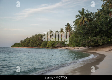 Postcard-style sandy beach with palms close to water, Mushu Island, Papua New Guinea - Stock Image
